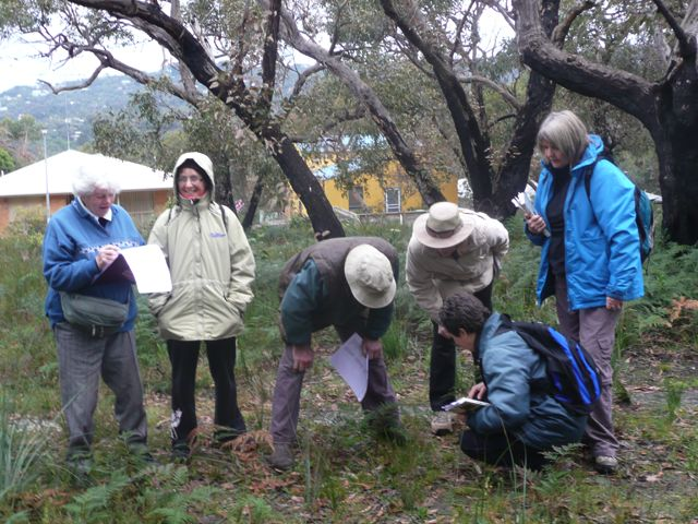 Group checking vegetation